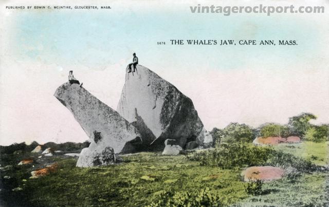 WhalesJaw1-post